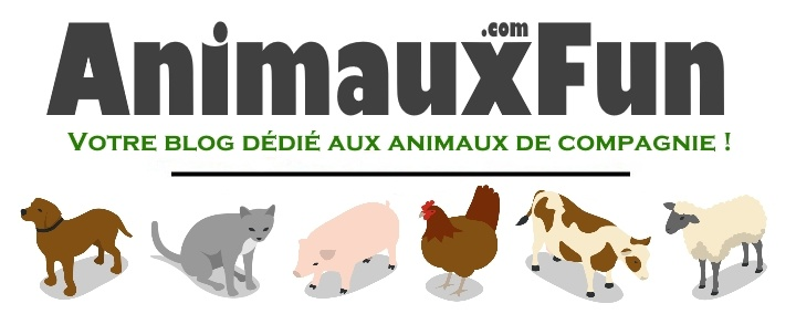 AnimauxFun.com : Blog Animaux Domestiques