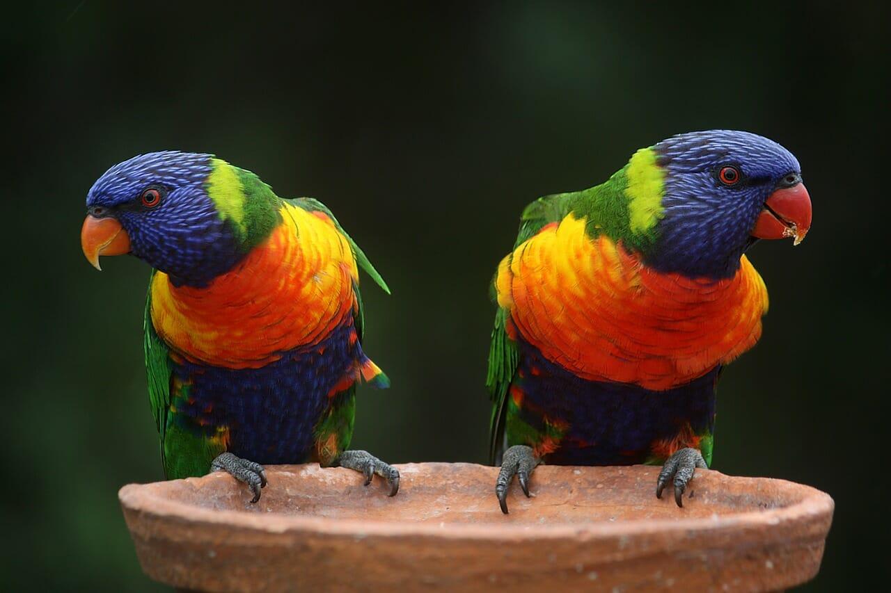 Assurance Oiseaux - Pourquoi et comment les assurer