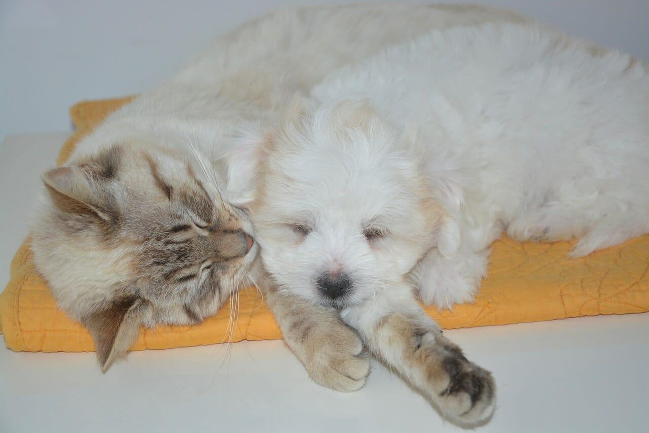 Quelle est la meilleure assurance pour animaux domestiques