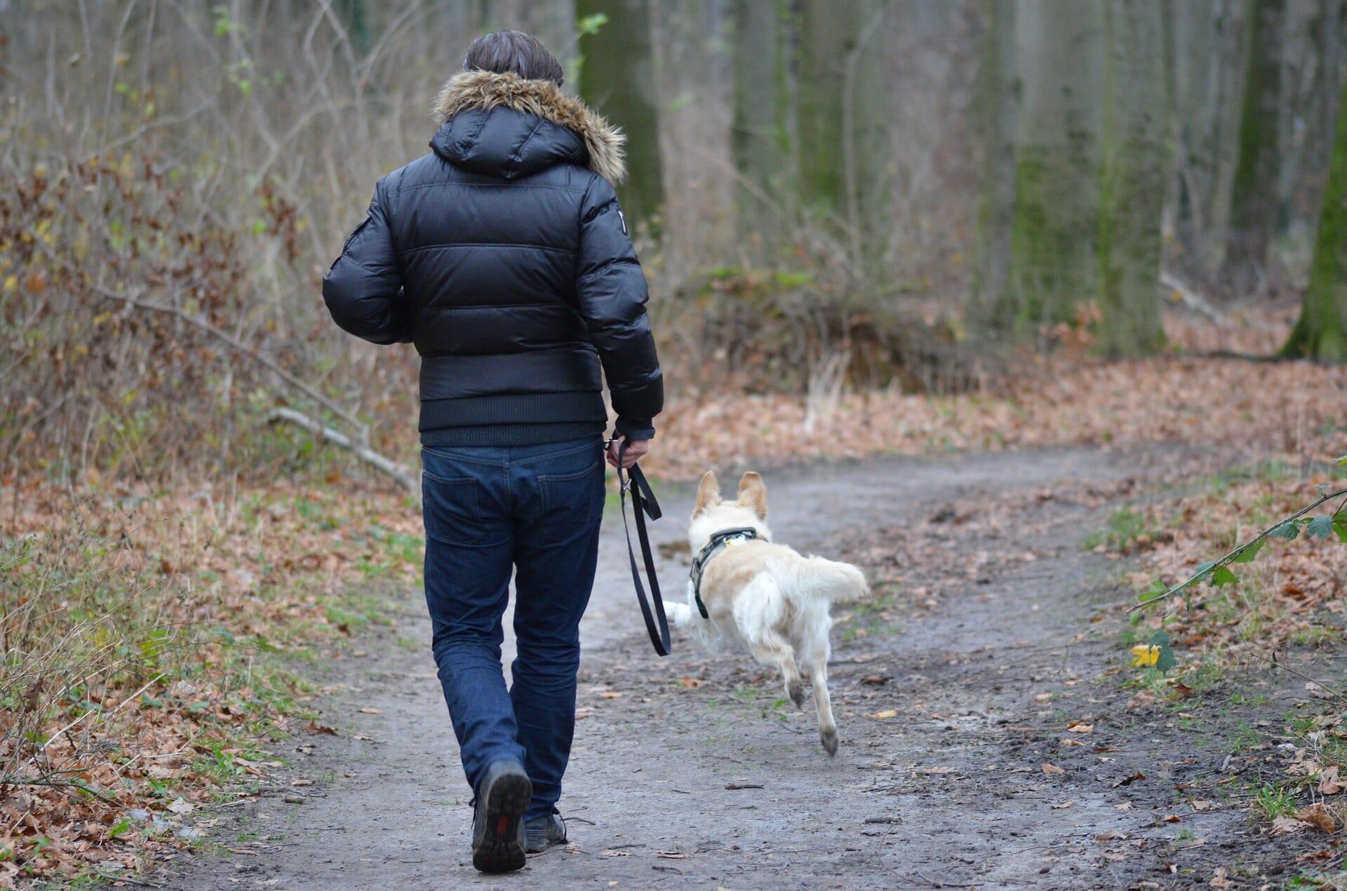 Pourquoi dois-je apprendre à mon chien à m'obéir ?