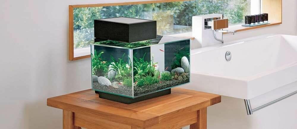 Comment entretenir son aquarium