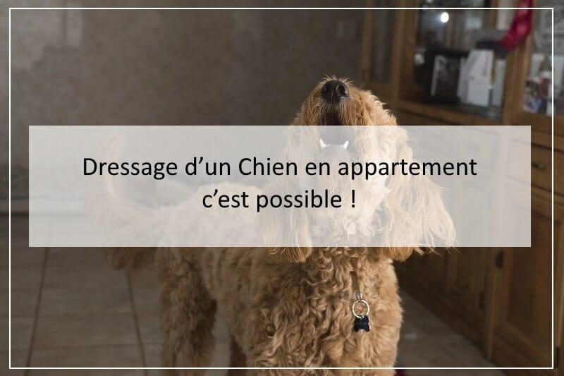 Dressage d'un Chien en appartement : c'est possible !