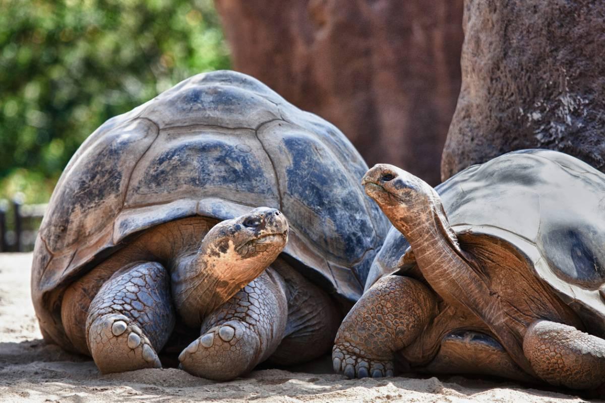 reconnaitre âge tortue