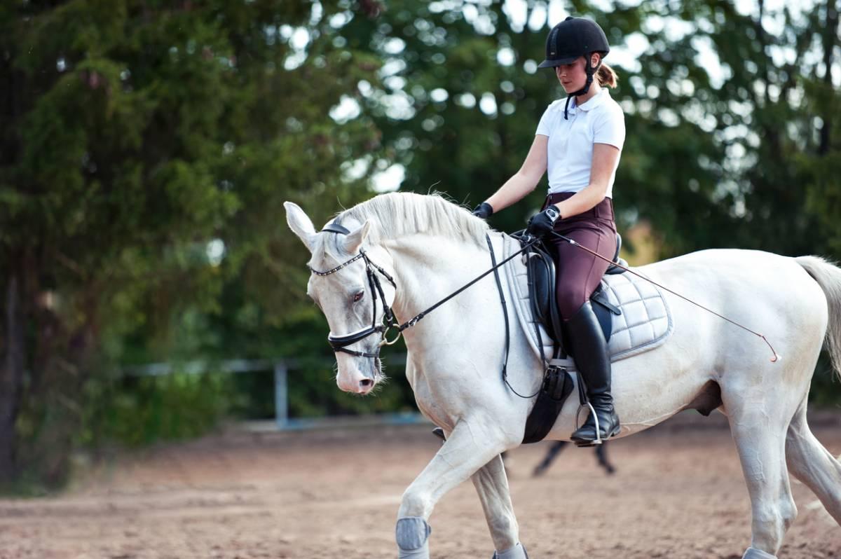 cheval top 5 meilleure idée cadeau équitation